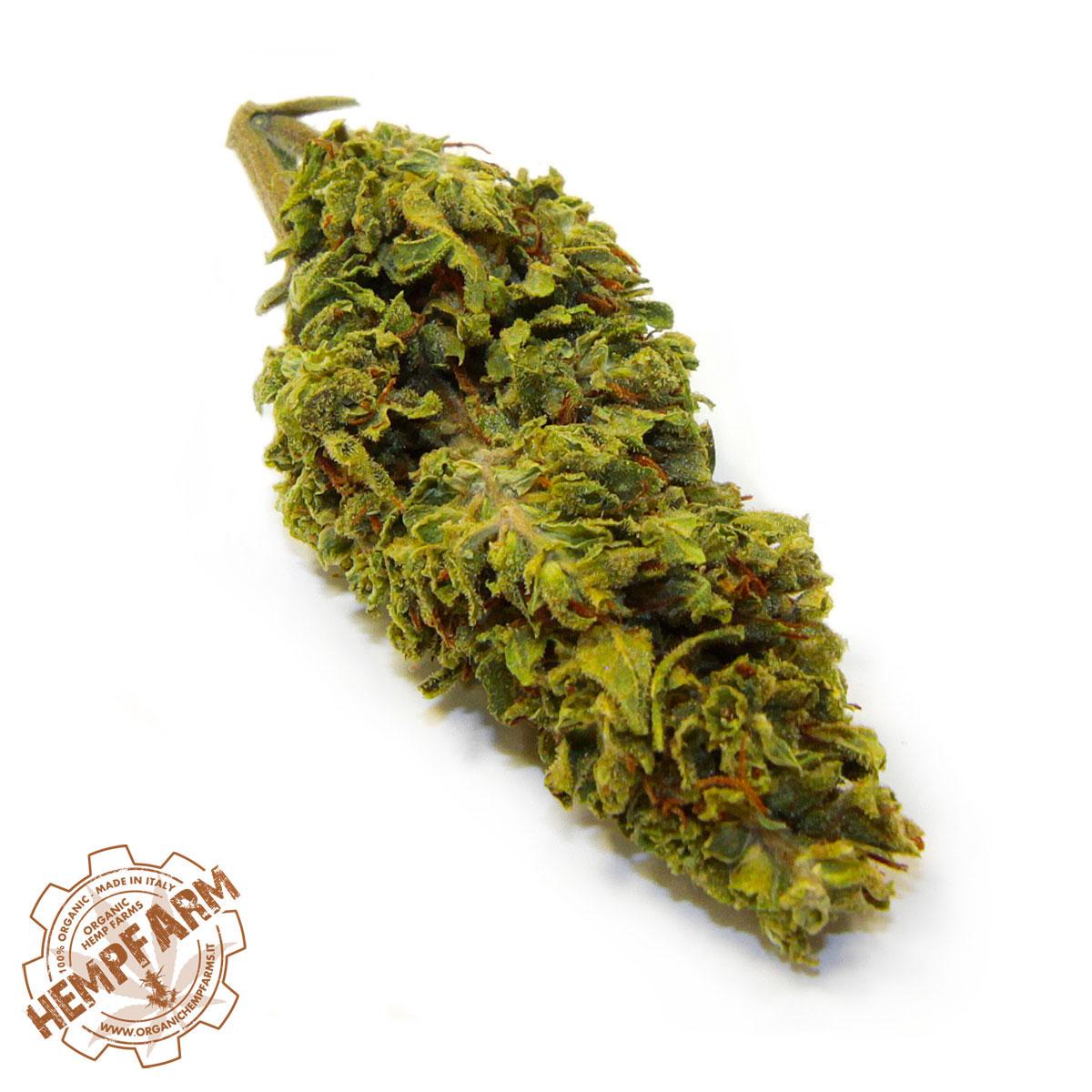 Infiorescenze cannabis legale Antal