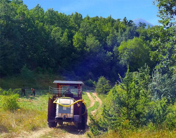 Organic Hemp Farms
